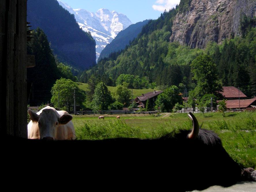 Alpler'de bahar en renkli halini alıyor, otostopla İsviçre'nin tam zamanı!