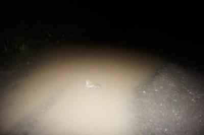iznik ultra kurbağası